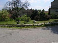 Trvale udržovaná zeleň v obci
